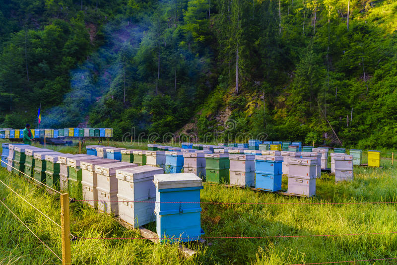 Bee hives. Somewhere in the mountains stock image