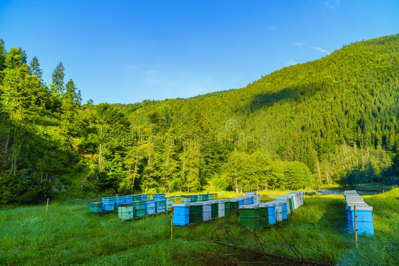 Bee hives. Somewhere in the mountains royalty free stock photo