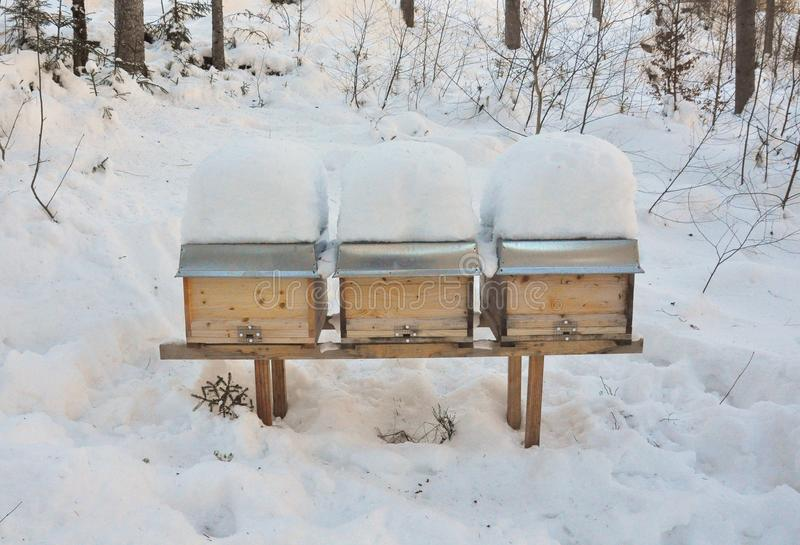 Bee hives in winter royalty free stock photos