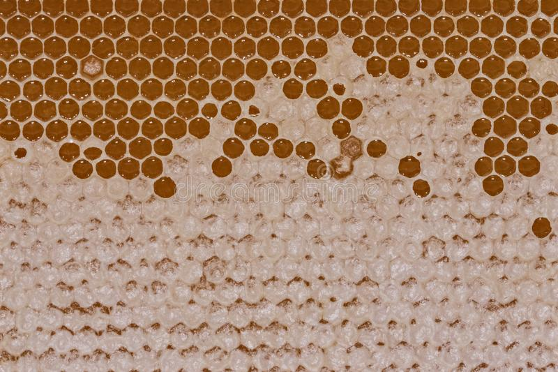 Macro honey in honeycomb pattern with wax on it. Bee honey in honeycombs texture with parts of it covered with wax. Macro photo of fresh honeycomb pattern royalty free stock image