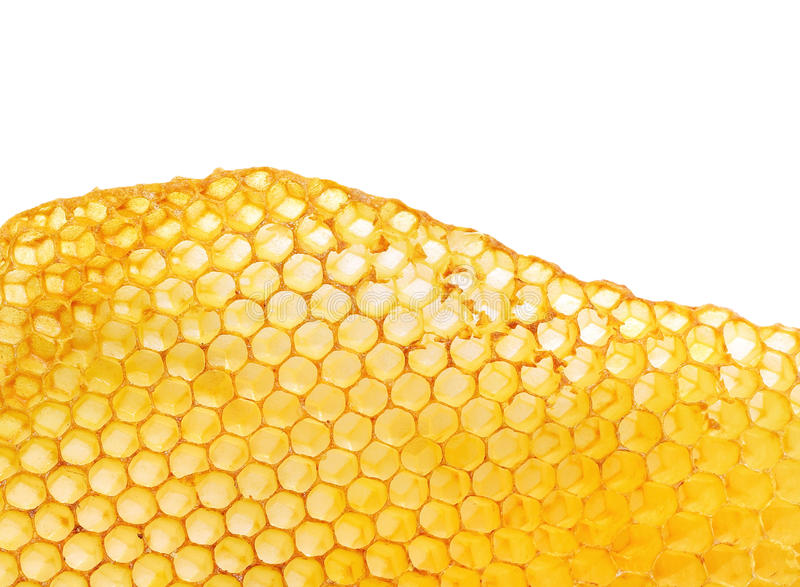 bee honeycomb stock photo
