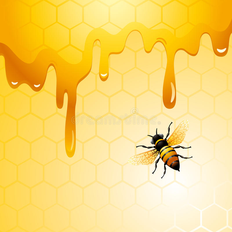 Bee on honeycomb. Background for you design royalty free illustration