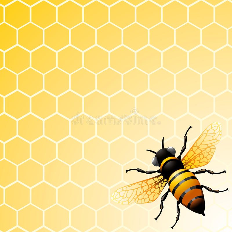 Bee on honeycomb. Background for you design stock illustration