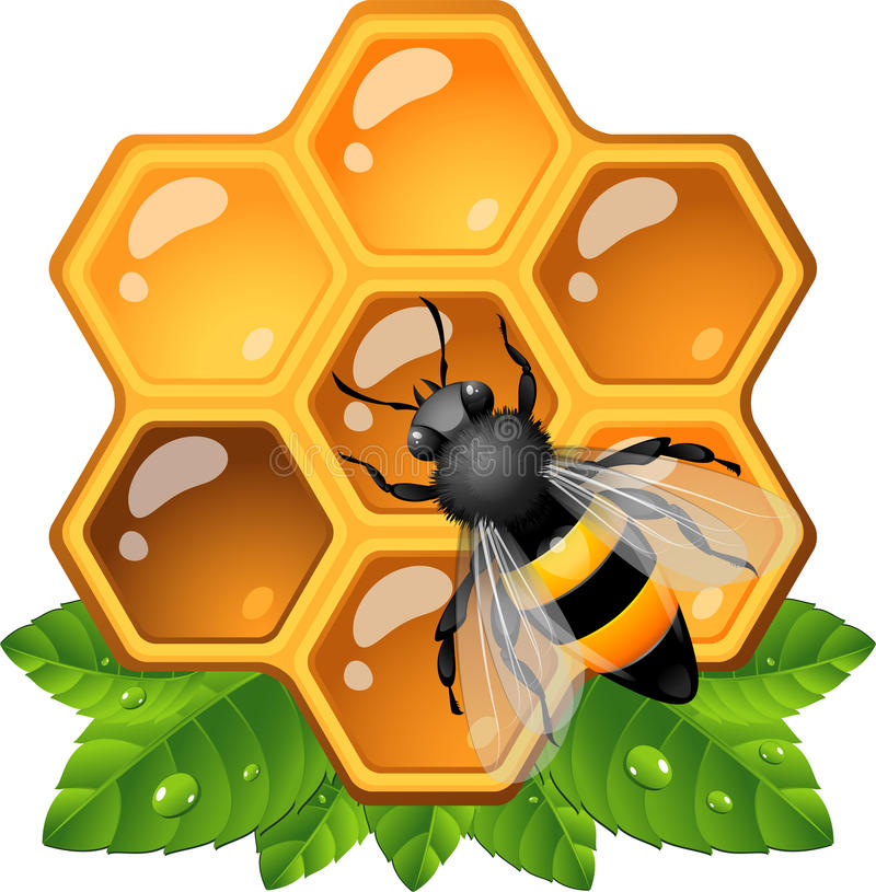 Bee on honeycomb. EPS 10 royalty free illustration