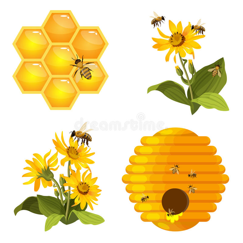 Bee on honeycomb, beehive nest, bees on yellow field flowers set isolated vector illustration