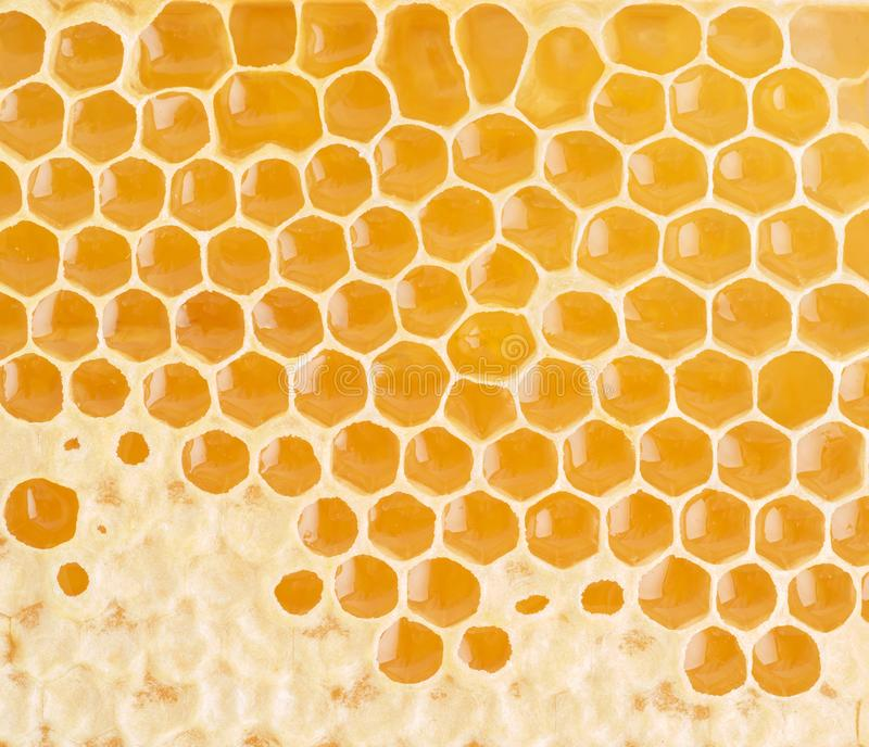 Bee honeycomb closeup, fresh stringy dripping sweet honey, macro royalty free stock images
