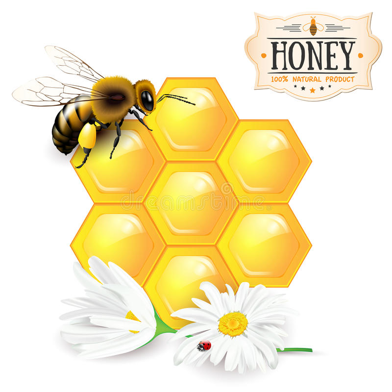 Free Bee, Honeycomb, Daisies And Honey Label Royalty Free Stock Photography - 69527387