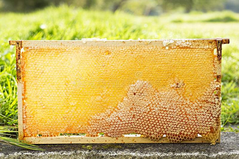 Bee honeycomb royalty free stock photo
