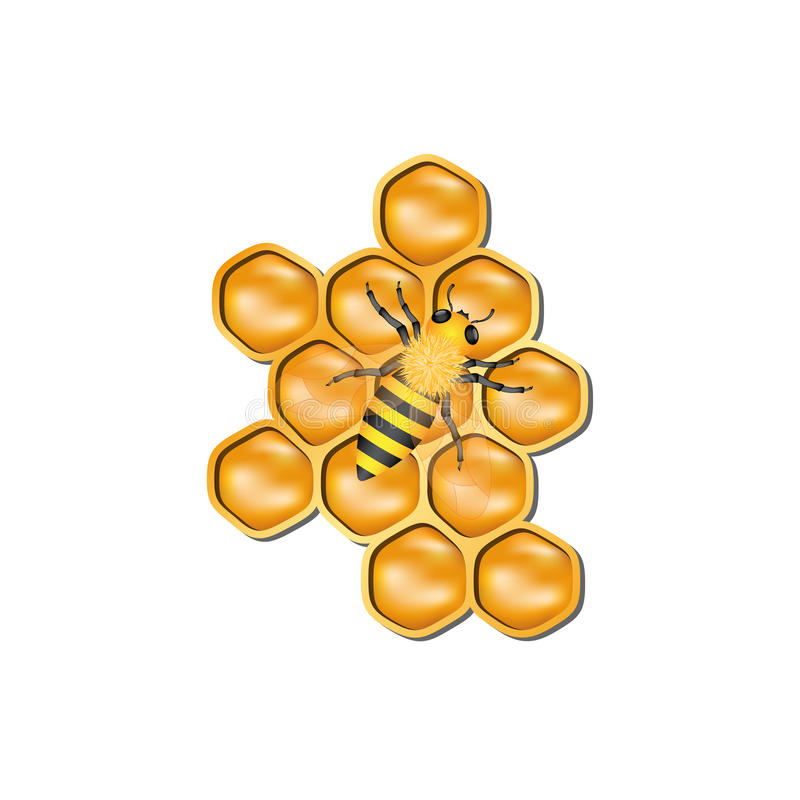Bee honeycomb with honey bee. On white background royalty free illustration