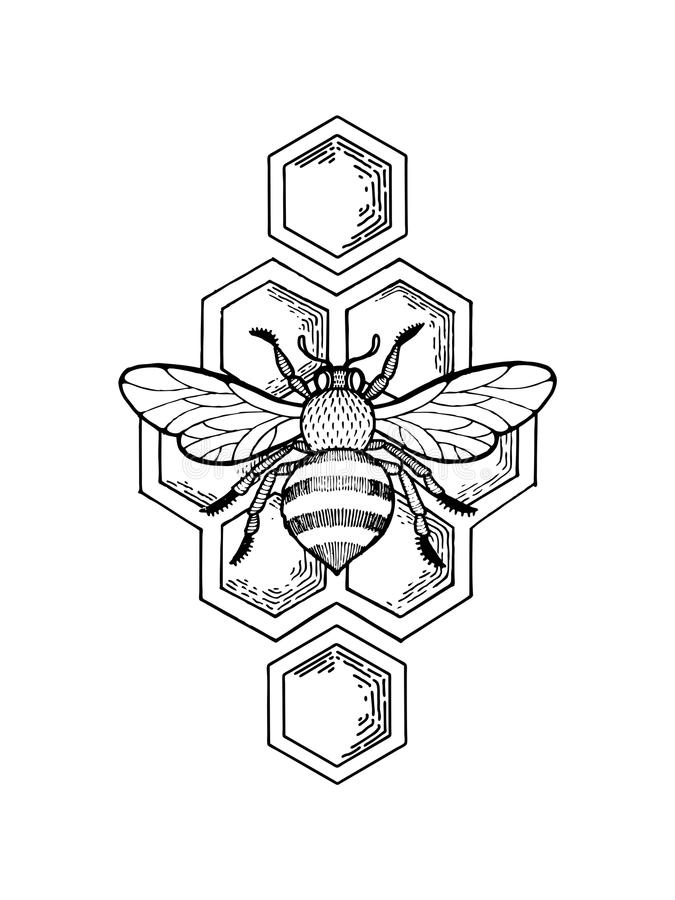 Bee and honeycombs engraving style vector. Bee and honeycombs engraving vector illustration. Scratch board style imitation. Hand drawn image stock illustration