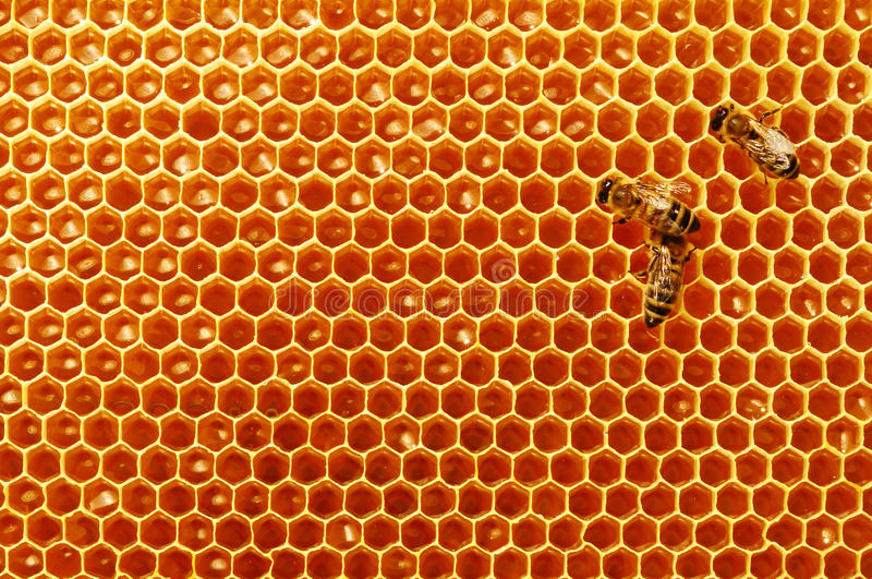 Download Bee Honeycombs With Honey And Bees. Apiculture. Stock Image - Image: 88738979