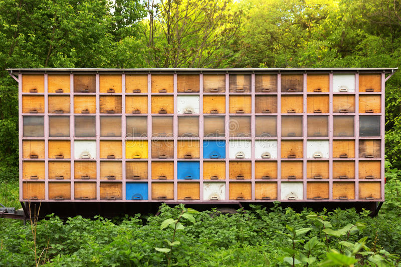 Bee house. Bee house, against forest background royalty free stock images