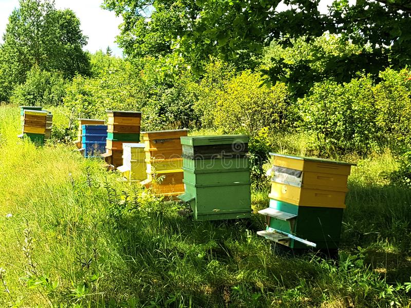 Bee houses in green field royalty free stock images