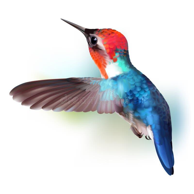 Free Bee Hummingbird - Mellisuga Helenae. Stock Photo - 93799430