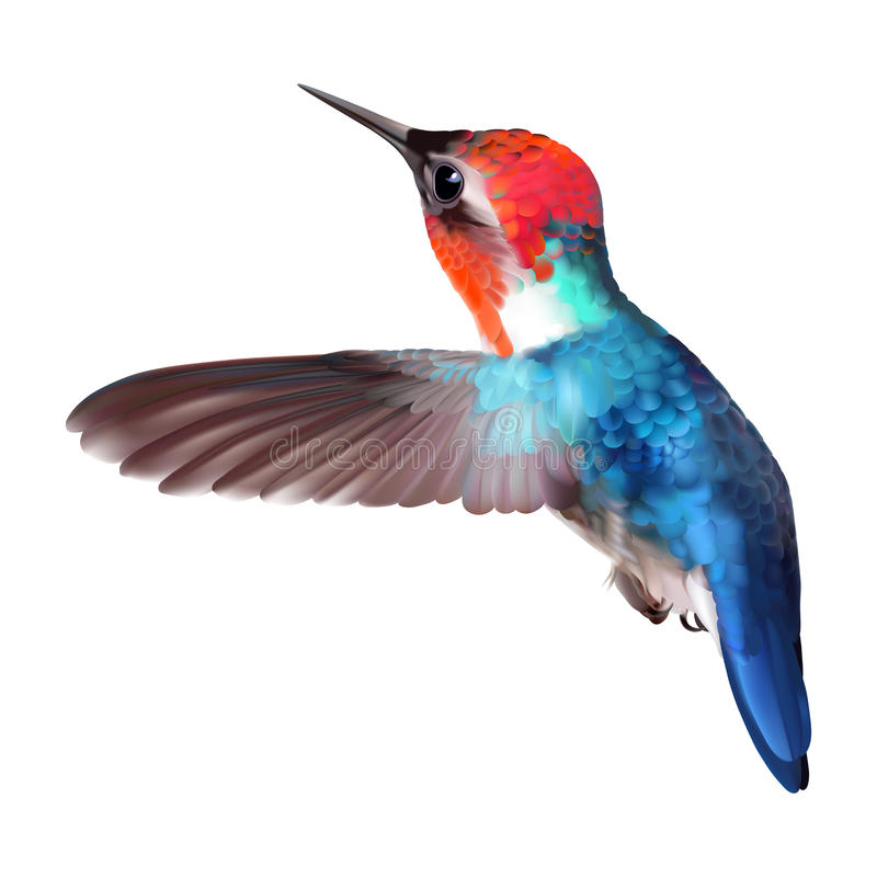 Free Bee Hummingbird - Mellisuga Helenae. Royalty Free Stock Photo - 93799465