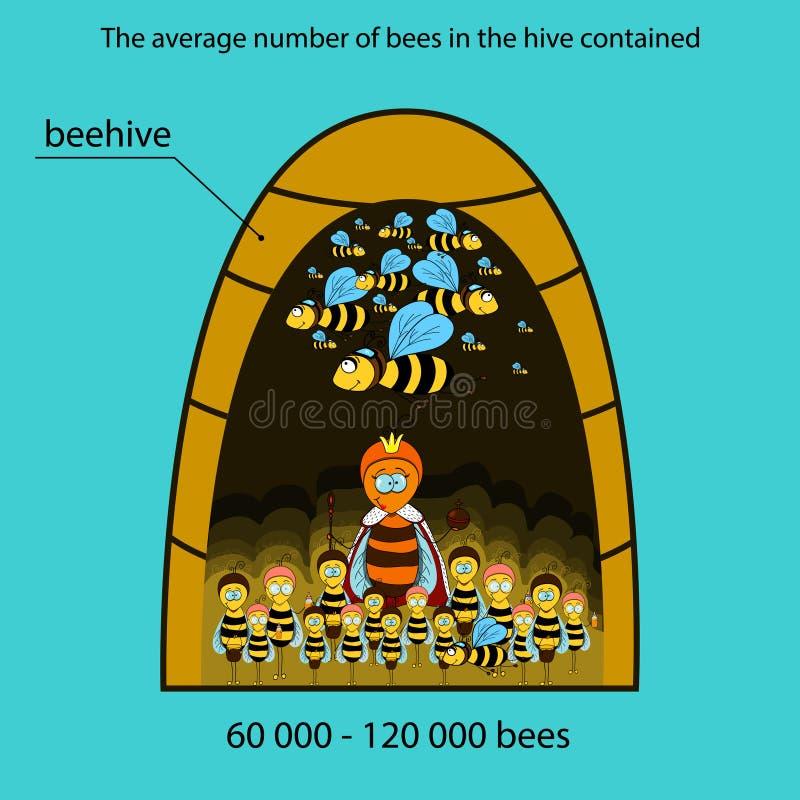 Bee infographics stock illustration