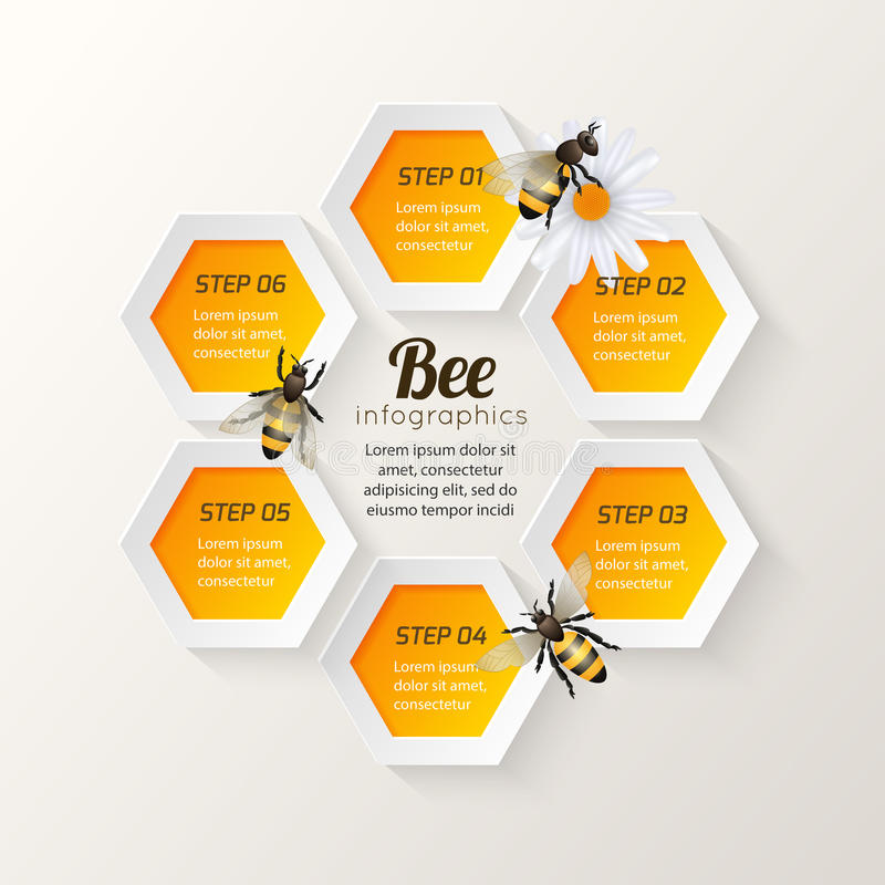 Free Bee Infographics Steps Royalty Free Stock Images - 41089299