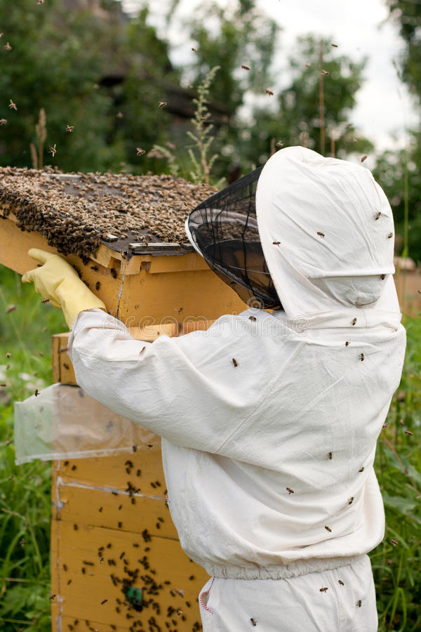 Bee keeper at work royalty free stock image