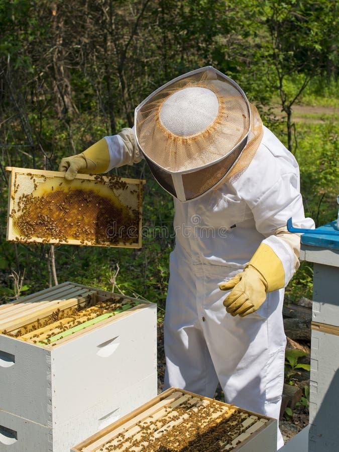 Bee Keeping royalty free stock photos