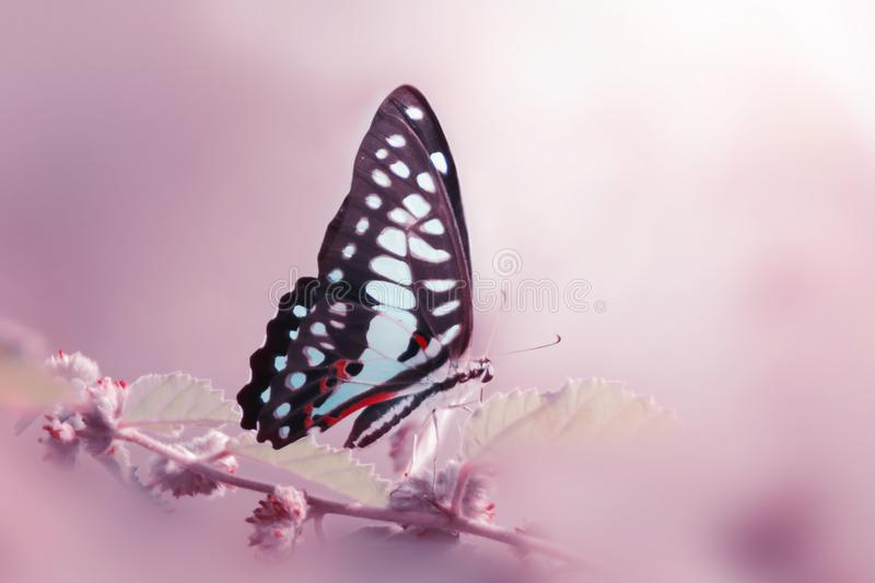 butterfly, animals, macro, bokeh, insect, nature, stock photos