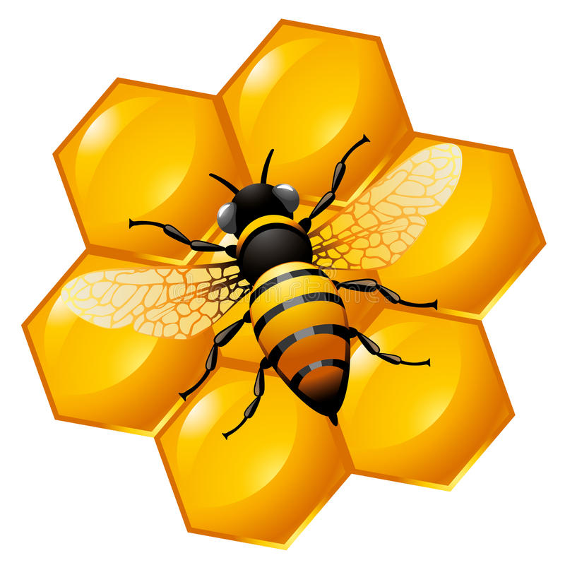 Bee on a part of honeycomb. Isolated on white. Also can be used as an icon stock illustration