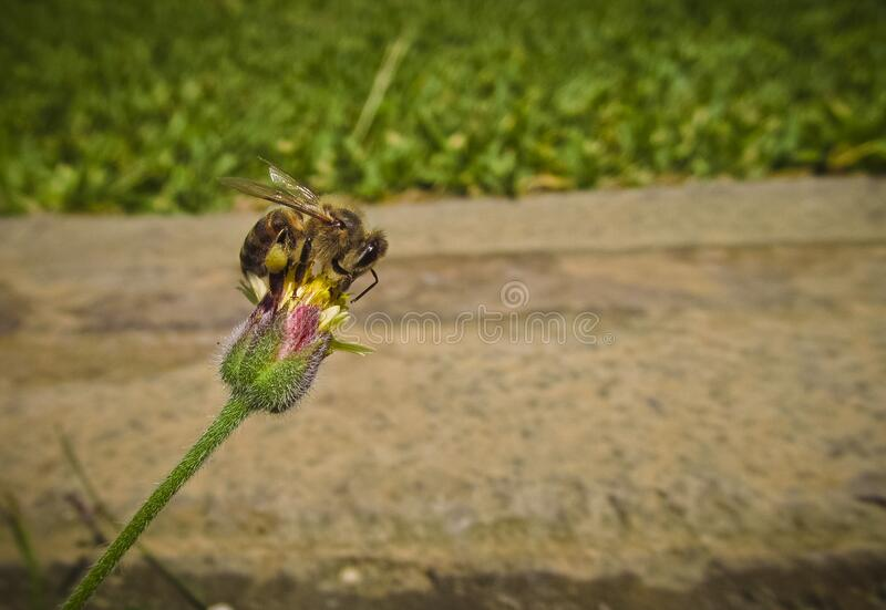 Bee On Pin And Green Flower Free Public Domain Cc0 Image