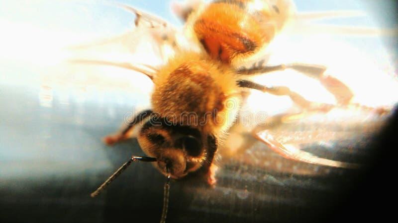 Bee please stock photos