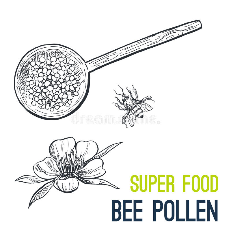 Bee pollen. Super food hand drawn sketch vector. Illustration vector illustration