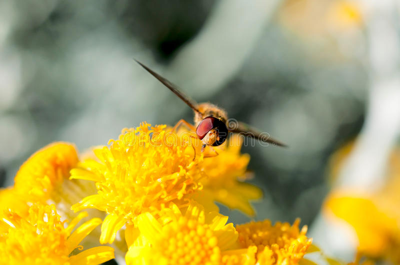 Download Bee and pollen stock photo. Image of photo, flower, leaf - 31826108