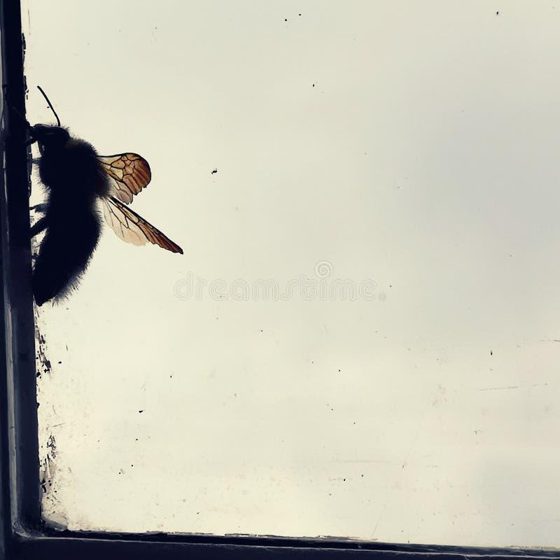 Bee Resting royalty-vrije stock fotografie