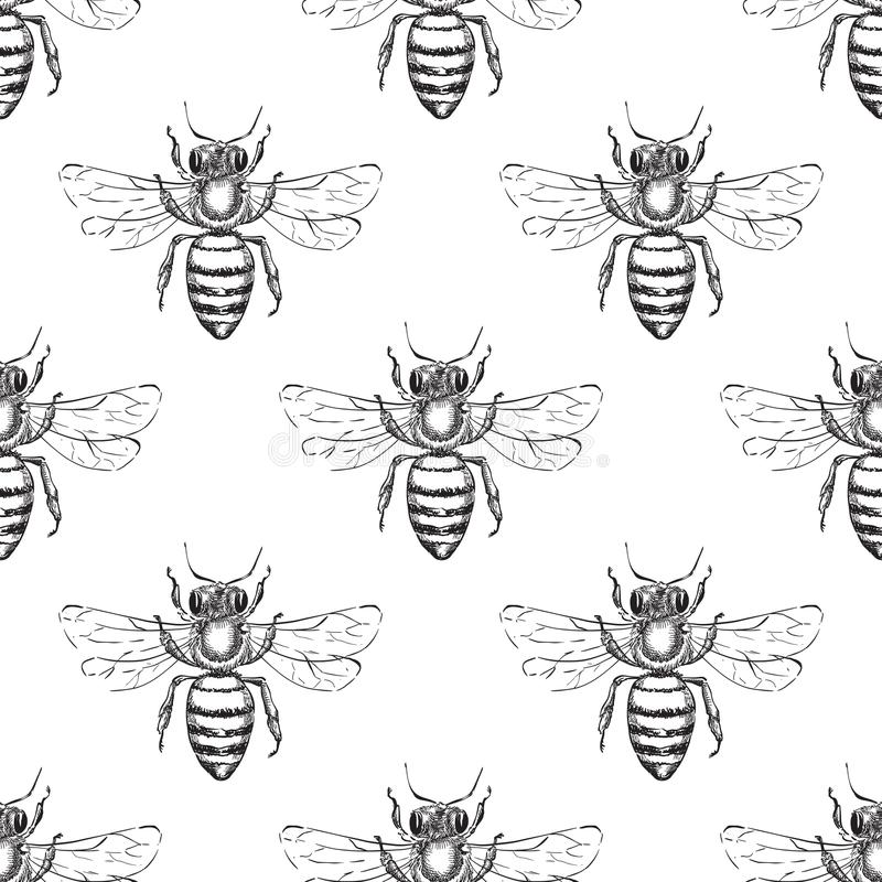 Bee seamless vector pattern. Sketch illustration of honeybee. Fashion textile print or honey packaging background design royalty free illustration