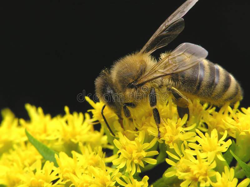 Bee in spring stock images