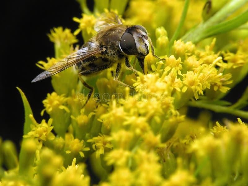 Bee in spring stock photo
