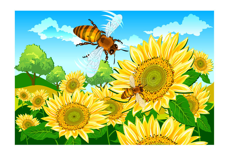 Download Bee and sunflower stock illustration. Image of honey, stalk - 8434100