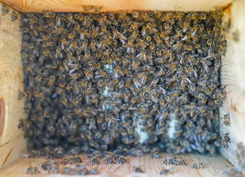 Bee swarm working, selective focus royalty free stock photo