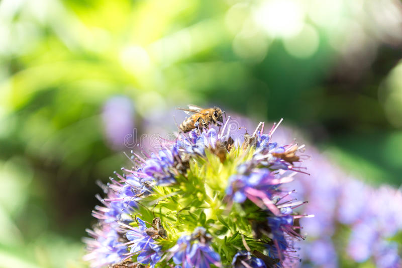 Bee about to pollinate a flower stock image