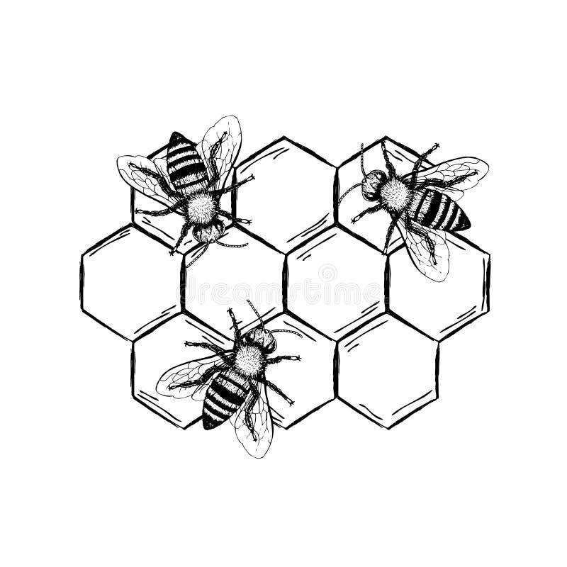 Bee vintage vector set stock vector illustration of design 77478608 download bee vintage vector set stock vector illustration of design 77478608 ccuart Gallery