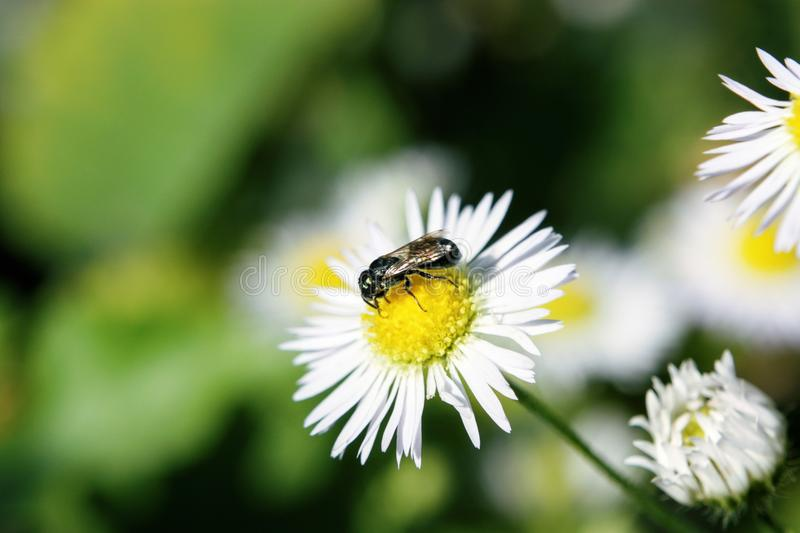 Bee on a flower stock photo