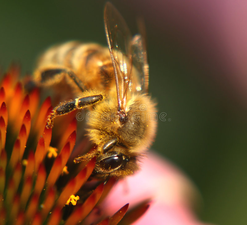 Bee at work stock images