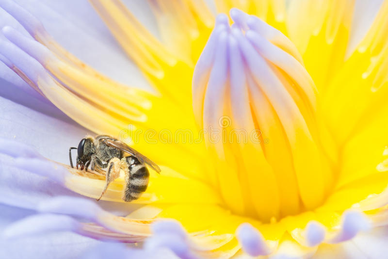 Download Bee Working Hard Collecting Pollen Stock Photo - Image: 28245078
