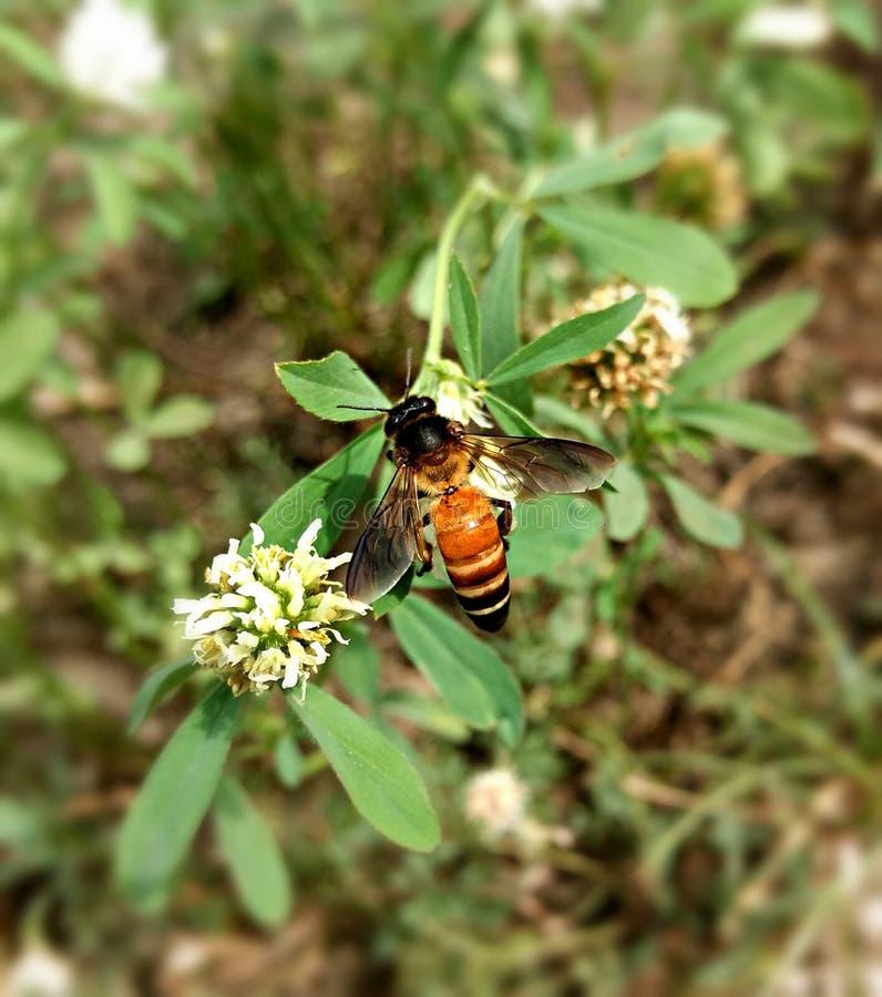 Bee world. Spreading the nector of life stock photos
