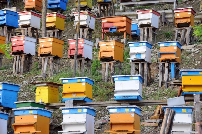 Bee Yard on the Hill. In Bulgaria stock image