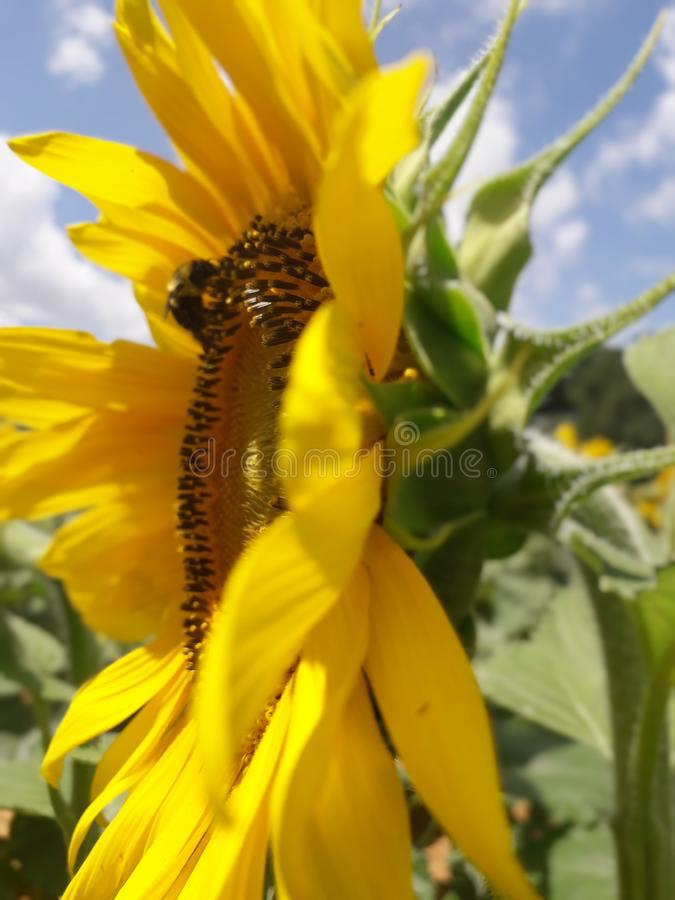 Bee youtiful stock photos