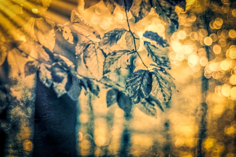 Beech branch in painterly light royalty free stock photos