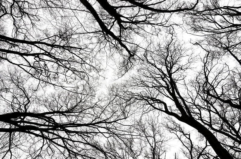 BEECH FOREST. Branches of trees against the sky stock image