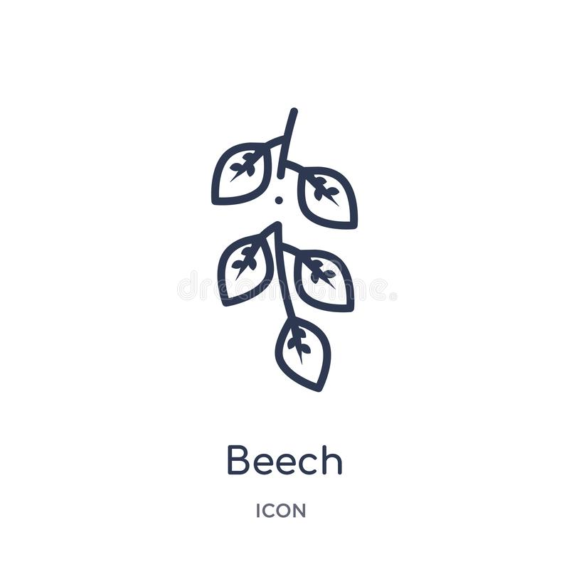 Beech icon from nature outline collection. Thin line beech icon isolated on white background vector illustration