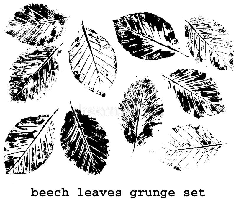 Download beech leaf prints stock illustration illustration of prints 34195155