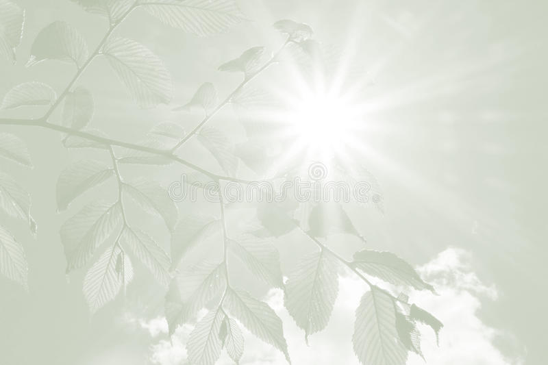 Beech leaves and rays of hope, sympathy background. Branch with beech leaves and rays of hope, sympathy background stock photo