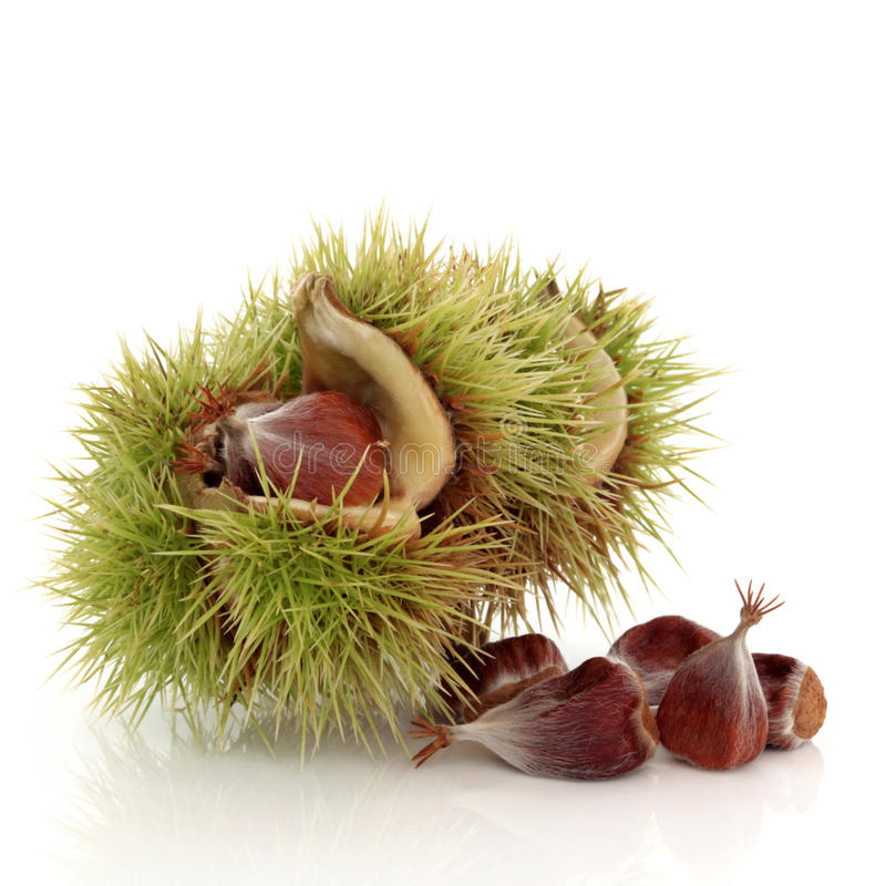 Beech Nuts stock image