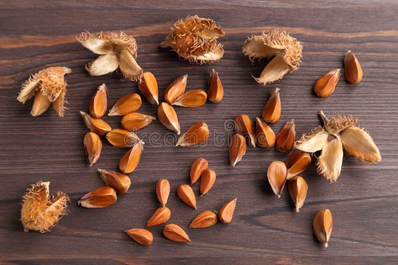 Beech nuts. royalty free stock photo
